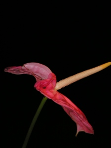 this image is part of the flower project by gary knox